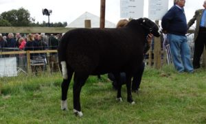 Champion - Wallridge Moor Whistler - C Anderson
