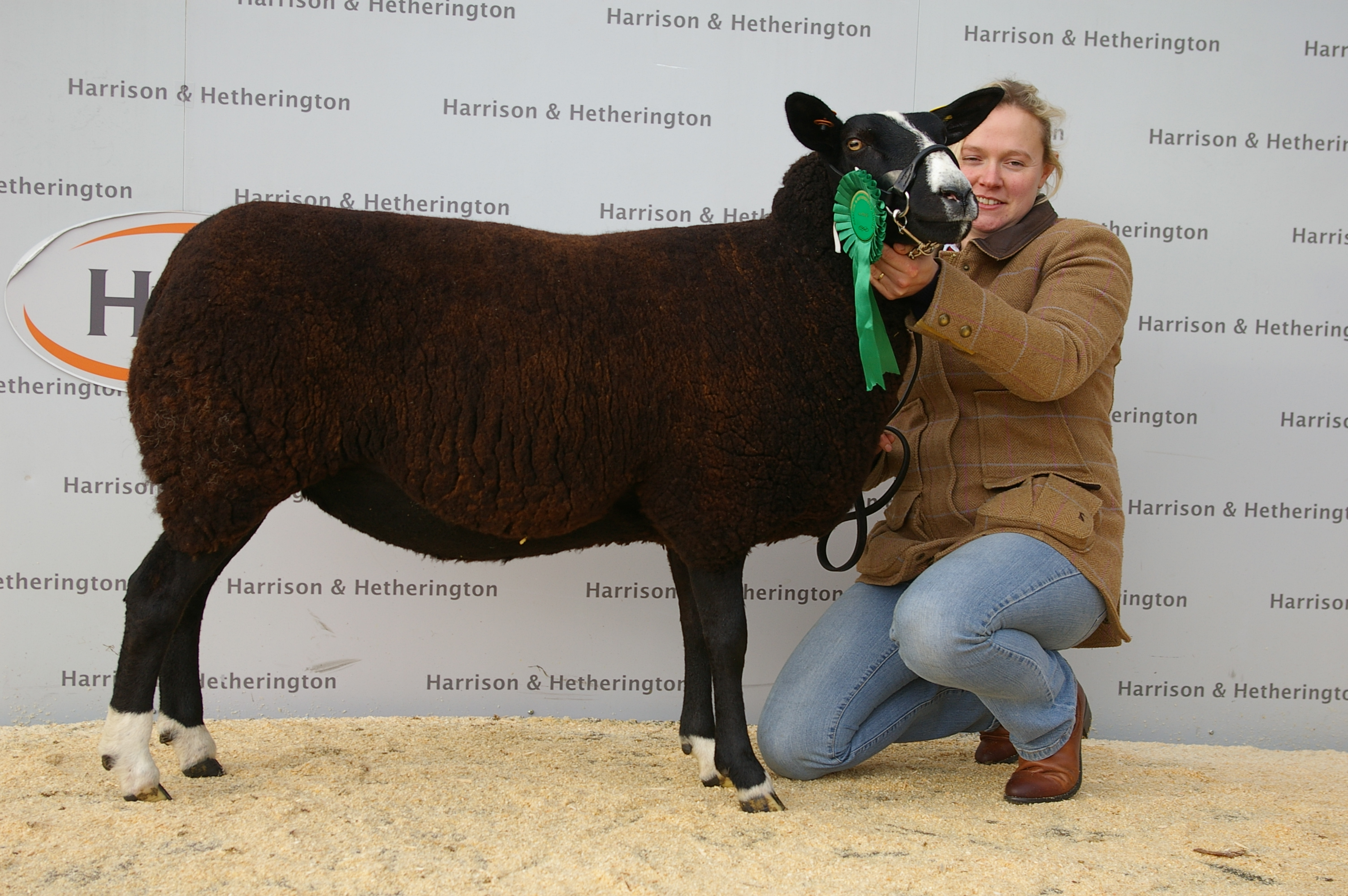 zwartbles-in-lamb-18-11-16