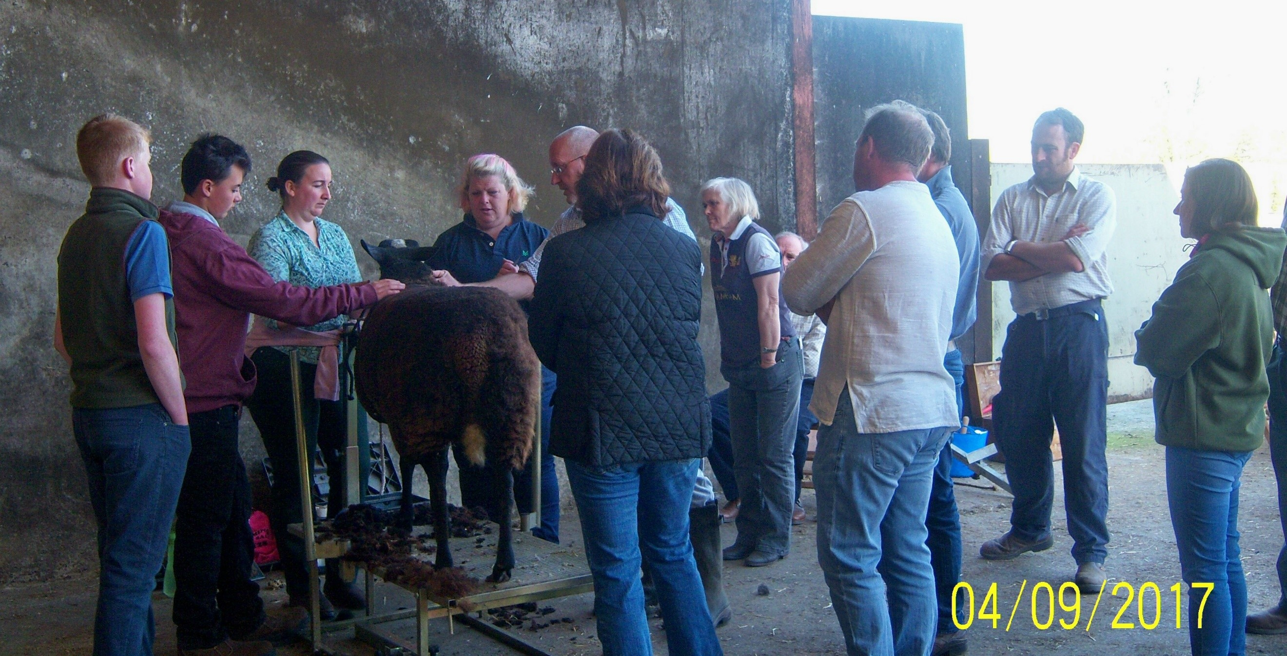 Southern Zwartbles Clipping Day 2