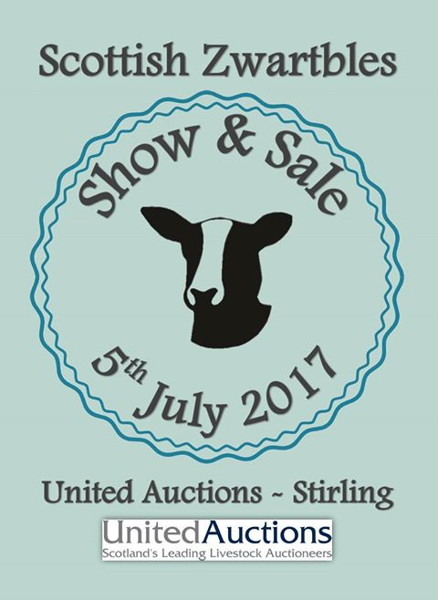 scottish zwartbles sale